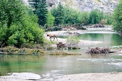 Cool, clear water (Jessie T* -- still catching up) Tags: mtrobsonprovincialpark britishcolumbia canada fraserriver yellowheadhighway elk cans2s
