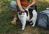 IMG_2484 (kz1000ps) Tags: boston massachusetts bostoncommon common park cats kitties kittens felines caturday purr catcafe brighton humane society adoptions