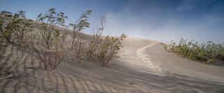 Windstorm at Mesquite Flat Dunes #1