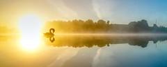 Swan on a Spectrum (Mark BJ) Tags: daisynook countrypark crimelake failsworth uk oldham hollinwoodcanal swan misty spectrum colourful manchester apparitional wavelength contrails reflections sunrise dawn pole ripples wake farm