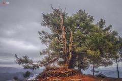 Tree of Serenity (AQAS.Clicks) Tags: landscape pakistan nature tracking photography ngc travelpakistan beautifulpakisan travel canon perspective moments natureshots naturephotography naturelovers scenery aqas kashmir oldtree serenity peace clouds hilltop