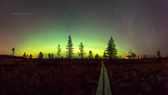 My Road to Auroras (M.T.L Photography) Tags: mtlphotography mikkoleinonencom myroadtoauroras auroraborealis northernlights sky stars night nightscape trees nikond810 autumn auroraphotography