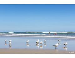 Gulls And Gals (red stilletto) Tags: oceangrove oceangrovebeach bellarinepeninsula summer reflection reflections seagull seagulls bird birds beach sea ocean