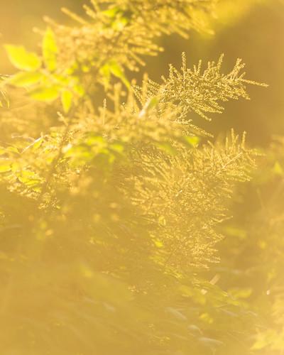 Kvällssolen lyser upp grönskan