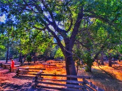 Under the Trees (lindayaecker) Tags: blueskies parks vacation colorful beautifulviews summertime landscapes pathways lightandshadows tourists trees