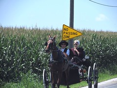 No passing zone (thomasgorman1) Tags: road equestrian buggy horse travel highway candid street streetphotos people amish pennsylvania corn farmland farming country rural canon