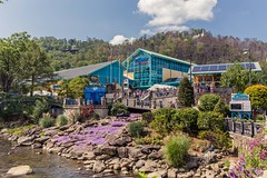 Ripleys Aquarium (davebentleyphotography) Tags: ripleyssmokeymountains canon canon6d davebentleyphotography gatlinburg tennessee tourism fish aquarium ripleysaquarium