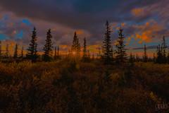 Slow Sunset (lgflickr1) Tags: alaska denali sunset trees dusk wilderness treeline pastel forest clouds sunburst dark flare
