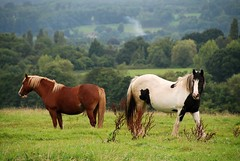 Equine-imity in the Forest of Dean (antonychammond) Tags: horses forestofdean gloucestershire forest field trees thegalaxy saariysqualitypictures