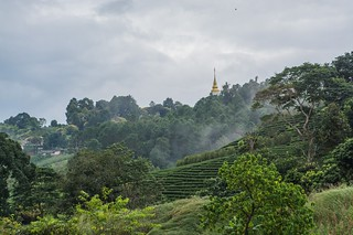mae salong - thailande 31