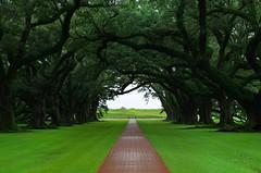 Oak Alley (Kristian Francke) Tags: south us plantation oak tree trees path pathway pentax nature garden green symbolism live louisiana