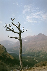 tree_2 (amackcrane) Tags: superia 400 nikkormat ft2 135 28mmf28