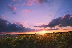 Sunset in the Vineyards (johaennesy) Tags: vine sunset landscape colourful bodensee immenstaad kippenhausen pentaxian pentax opensourcesoftware gimp rawtherapee k1 badenwürttemberg