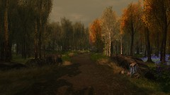 The Hunters Trail (alexandriabrangwin) Tags: alexandriabrangwin secondlife 3d cgi computer graphics virtual world photography beautiful nature walk trail hiking track dirt autumn leaves trees forest scenery dark shadows afternoon cloudy mist river pond tree stump rocks logs raccoons grass flowers
