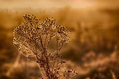 IMG_0618_0619 (JJ_1968) Tags: limburg summer sunshine autumn foggy