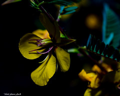 The Secrets Between Us (that_damn_duck) Tags: nature plant flower petals blossom blooming stem stems