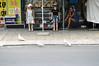 Pigeon parade (Roving I) Tags: whitepigeons birds street larue beer shopdummies childrenswear shops retail legs shopkeepers danang vietnam