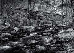 Bridge in the woods (Tim Ravenscroft) Tags: coveredbridge nissitissit river woodland monochrome blackandwhite blackwhite hasselblad hasselbladx1d x1d