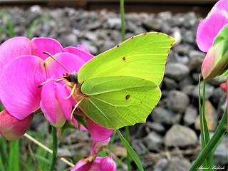 Butterfly 1428
