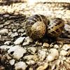 On va chez toi ou on va chez moi ? (NUMERIK33) Tags: hipstamatic escargots escargot joke amour