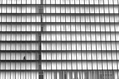 From a compartment to the other one (pascalcolin1) Tags: paris13 bnf homme man case compartment fenetres windows photoderue streetview urbanarte noiretblanc blackandwhite photopascalcolin