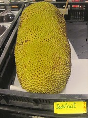 Artocarpus heterophyllus (Pick him!) Tags: artocarpus heterophyllus jackfruit nangka
