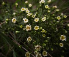 (_mo.foto_) Tags: flowers blur lyrics song