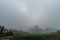 Morgennebel (J.Weyerhäuser) Tags: mainz laubenheimerhöhe spinnennetz nebel felder