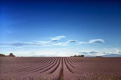 Restless Dreams (- FMD -) Tags: provenza provence france franphotography canon canon6d canonphotography 2470mm landscape lavanda lavande sky blue cielo azul francia europa