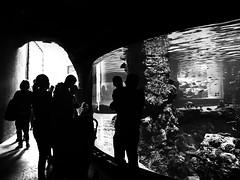 silhouettes (Eggii / more off- on holidays:-)) Tags: silhouettes afrykanariumwroclaw oceanarium wrocław zoo bw monochrome people iphone7