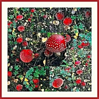 Punakärpässieniä metsässä
