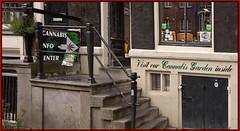 Cannabis Garden (martin alberts Pictures of Amsterdam) Tags: cannabis cannabisgarden redlightdistrict martinalberts hash amsterdam oudezijdsachterburgwal sign amsterdamsredlightdistrict
