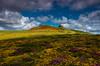 Final flourish (snowyturner) Tags: dartmoor haytor flowers landscape sky clouds heather gorse summer golden 1855 mm