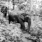 Care for elephants thumbnail