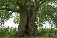 DSC01967 (mattmobbs) Tags: tree trees wildlife nature naturalist naturelover outdoors wilderness wilds green trunk naturalism fields earth outside meditation peace out a6000 alpha