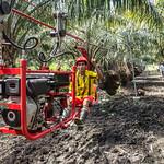 Transporting oil palm thumbnail