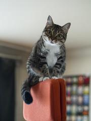 Avignon (lauriepetsitterparis) Tags: chat chatte mignon miaou minette minou petsitter catsitter cat