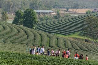 mae fah luang - thailande 20
