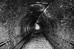 Tunnel (JY_Photos) Tags: jyphotos indiana usa monochrome blackandwhite bw nikon nikond7500 affinityphoto outdoor tokina1228mmf40atxpro tokina dxformat dslr dxoopticspro tunnel flowers bench growth columbus