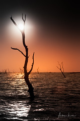 Creepy Kariba 9 (Alec Lux) Tags: kariba zimbabwe dead forest lake lakekariba landscape landscapephotography mineralized nature naturephotography ripples silhouette trees water sunset sunlight goldenhour mashonalandwestprovince zambia zw