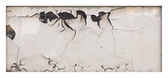 Dream Sequence No. 4 (Goran Patlejch) Tags: paint peeling glass ant insect decay cracks monochromatic white