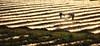 Strawberry fields forever II (ramerk_de) Tags: sunrise beerenmeile regensburg strawberry hdr backlight diamondclassphotographer