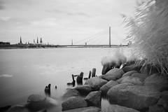 IR Experiments & reeds in the wind (MarxschisM) Tags: latvia riga river daugava ir filter bw conversion bridge old town xt1 samyang21 ir760