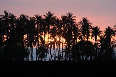 Sunset (mhawkins) Tags: bigisland hawaii sunset palm palmtrees keawaikibay