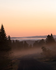Morning (Ashild Andrea) Tags: blefjell mountain outdoors autumn fjell moss lichen heather lyng mose myr skog