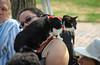 IMG_2518 (kz1000ps) Tags: boston massachusetts bostoncommon common park cats kitties kittens felines caturday purr catcafe brighton humane society adoptions