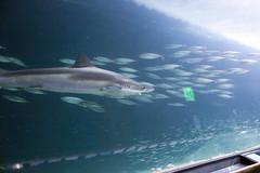 IMG_7396 (Malu Green!) Tags: sanfrancisco california califórnia eua usa aquarium aquário aquariumofthebay sanfranciscoaquarium fish color colores cores peixe aguaviva estreladomar seastar tubarão shark jellyfish jellies