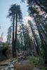 2017Seki-298-HDR (chenhengyu) Tags: 20170901 crystalcave kingcanyonnationalpark labourday longweekend rv seki sequoianationalpark sequoiatree