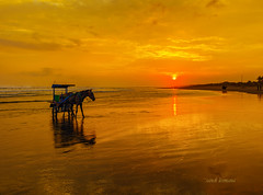 jogyakarta (sandilesmana28) Tags: orange sun horse jogyakarta water shadow sand transportation