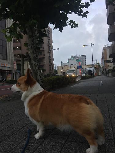 EIN 風強い(>_<)